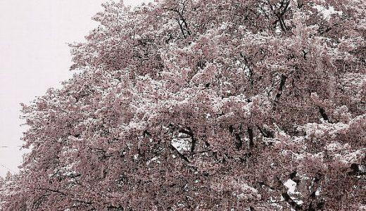 劇団雪桜旗揚げ公演 「今に疲れた人達へ。」